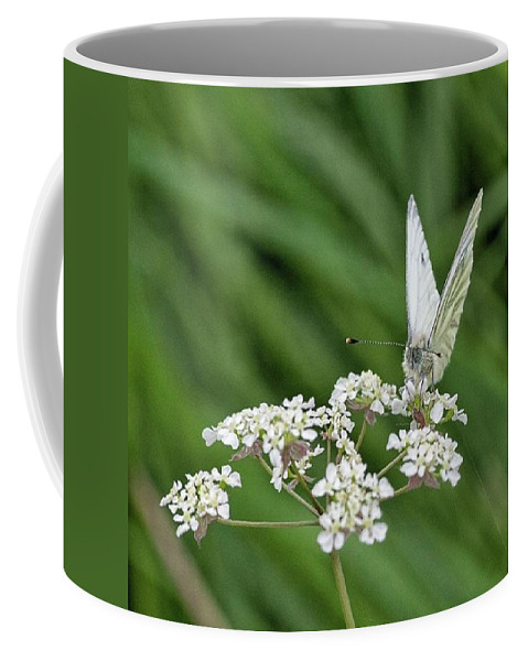 Insectsofinstagram Coffee Mug featuring the photograph A Green-veined White (pieris Napi) by John Edwards