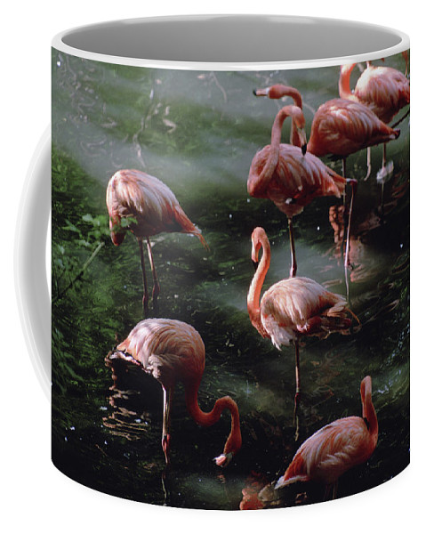 Folsom Children's Zoo Coffee Mug featuring the photograph A Group Of Flamingos At The Folsom by Joel Sartore