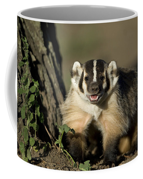 Photography Coffee Mug featuring the photograph A Hand-raised Badger At The Home by Joel Sartore