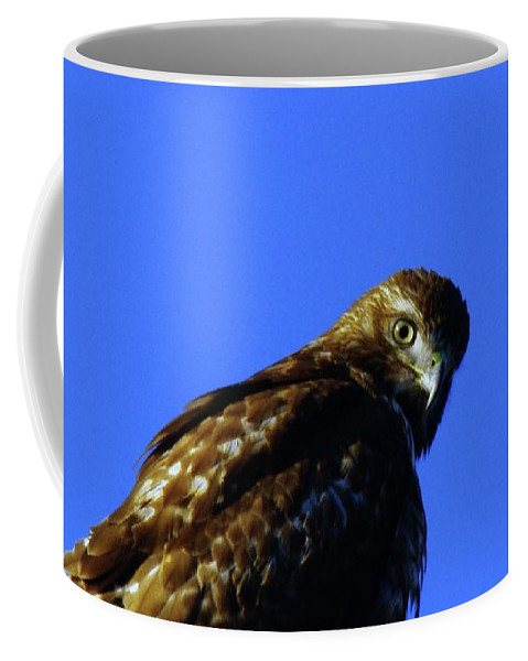 Hawks Coffee Mug featuring the photograph A Hawk Looking Back by Jeff Swan