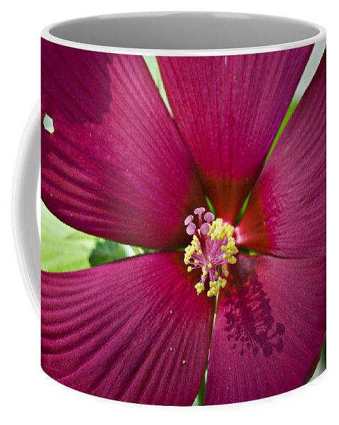 Hibiscus Coffee Mug featuring the photograph A Hole In One by Teresa Mucha