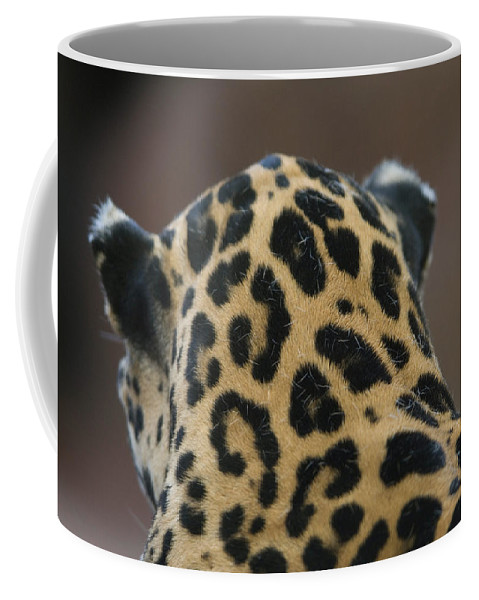 Photography Coffee Mug featuring the photograph A Jaguar At Omahas Henry Doorly Zoo by Joel Sartore