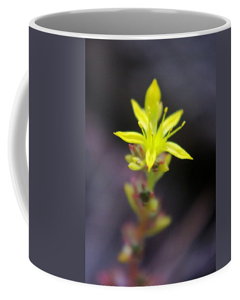 Flowers Coffee Mug featuring the photograph A Little Yellow Star by Jeff Swan