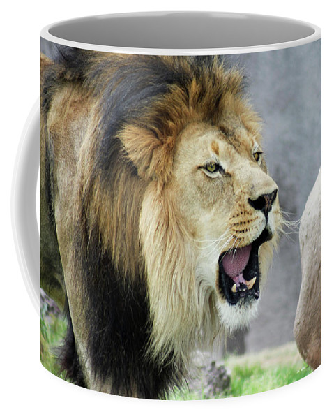 Animal Coffee Mug featuring the photograph A Male Lion, Panthera Leo, Roaring Loudly by Derrick Neill
