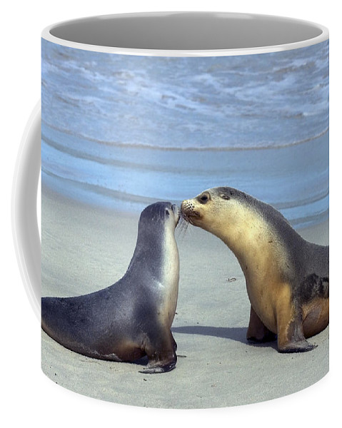 Sea Lion Coffee Mug featuring the photograph A Mothers Love by Mike Dawson