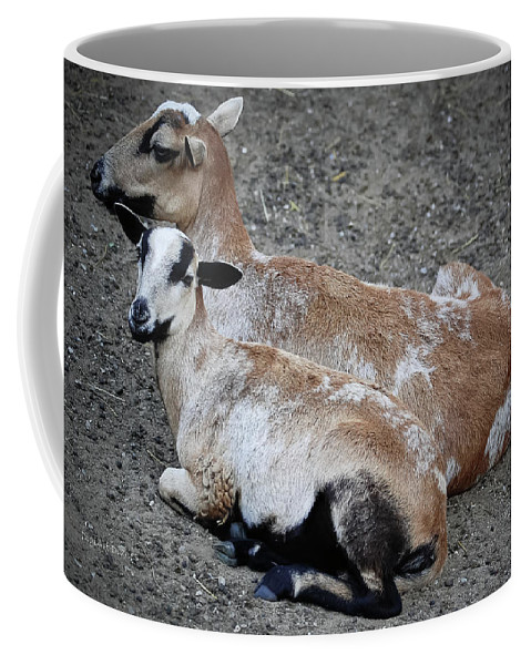 Goats Coffee Mug featuring the photograph A Nanny And Her Kid by DigiArt Diaries by Vicky B Fuller