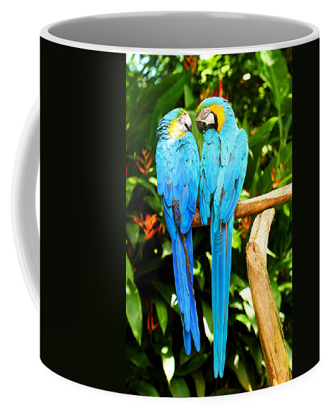 Bird Coffee Mug featuring the photograph A Pair of Parrots by Marilyn Hunt