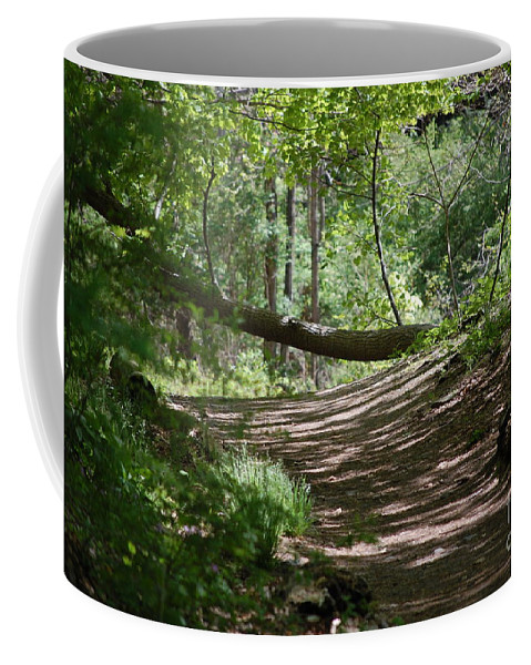 Landscape Coffee Mug featuring the photograph A Path In The Woods by David Lane