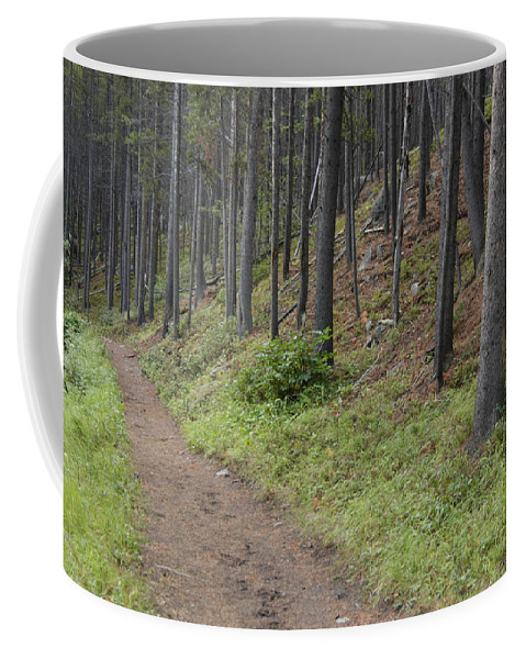 Red Lodge Coffee Mug featuring the photograph A Path In The Woods by Stacy Gold