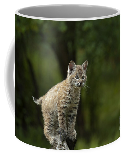 Lynx Coffee Mug featuring the photograph A Perch With A View by Sandra Bronstein