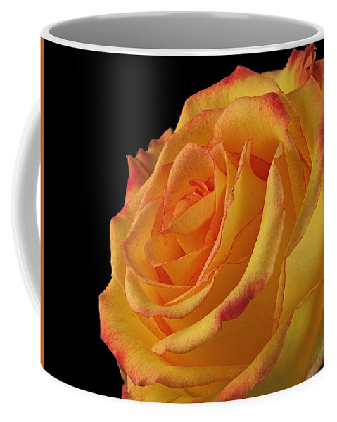 Rose Coffee Mug featuring the photograph A Perfect Rose #2 by Ajit Pillai