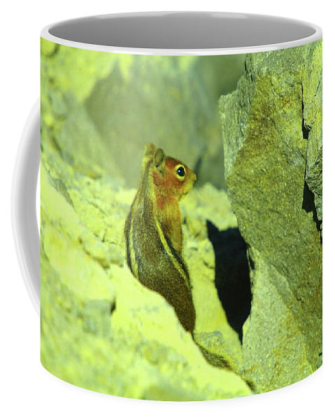 Chipmunks Coffee Mug featuring the photograph A Perky Chipmunk by Jeff Swan