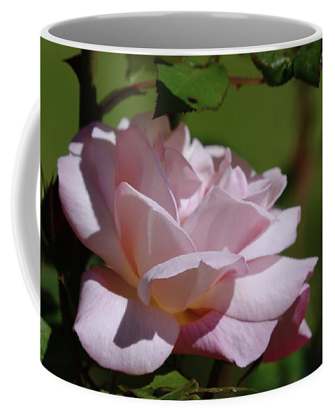 Roses Coffee Mug featuring the photograph A Pink Rose by Jeff Swan
