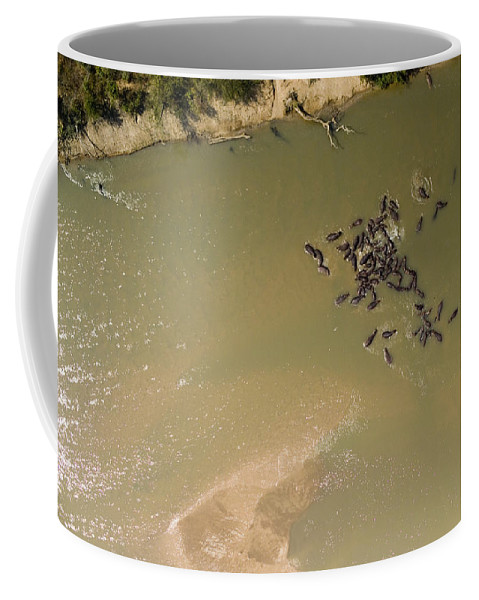 Landscape Coffee Mug featuring the photograph A Pod Of Hippos In The Luangwa River by Michael Fay