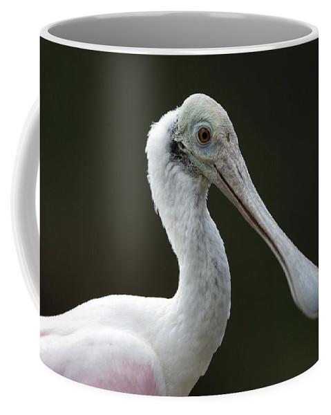 Photography Coffee Mug featuring the photograph A Roseate Spoonbill Ajaia Ajaja by Joel Sartore