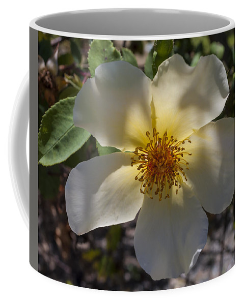 Flower Coffee Mug featuring the photograph A Simple Rose by Bruce Frye
