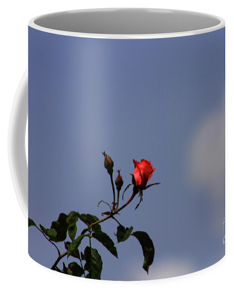 Rose Coffee Mug featuring the photograph A Single Rose by Tommy Anderson