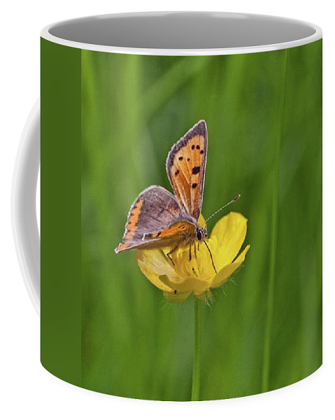 Insect Coffee Mug featuring the photograph A Small Copper Butterfly (lycaena by John Edwards