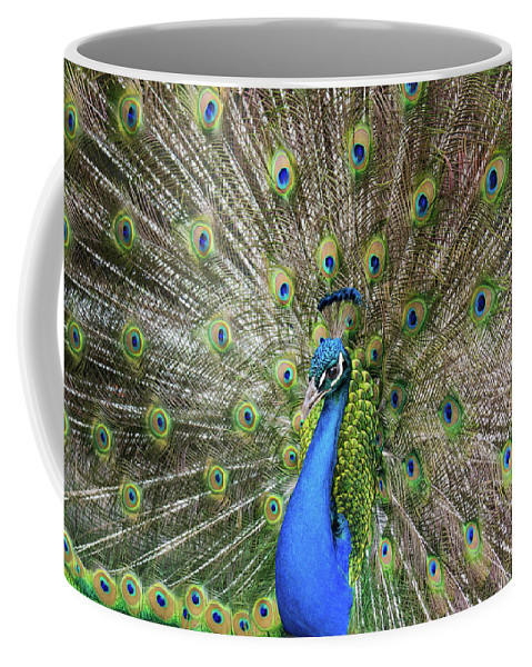 Peacock Coffee Mug featuring the photograph A Smile For You by Tran Boelsterli