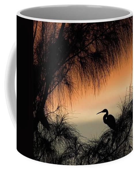 Egret Coffee Mug featuring the photograph A Snowy Egret (egretta Thula) Settling by John Edwards