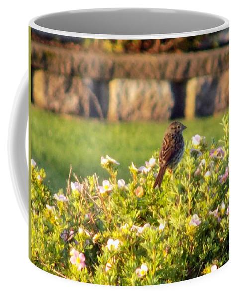 Sparrow Coffee Mug featuring the photograph A Sparrow Surveys by William Tasker