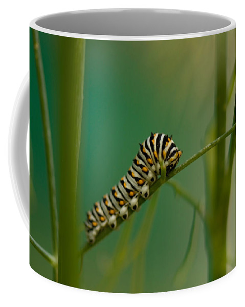 Photography Coffee Mug featuring the photograph A Swallowtail Butterfly Caterpillar by Joel Sartore
