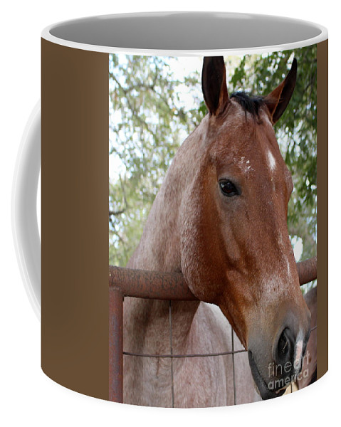 Horse Coffee Mug featuring the photograph A Sweet Face by Glenn Aker