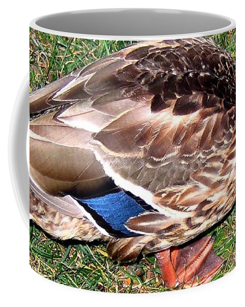 Duck Coffee Mug featuring the photograph A Tame Crow by Will Borden