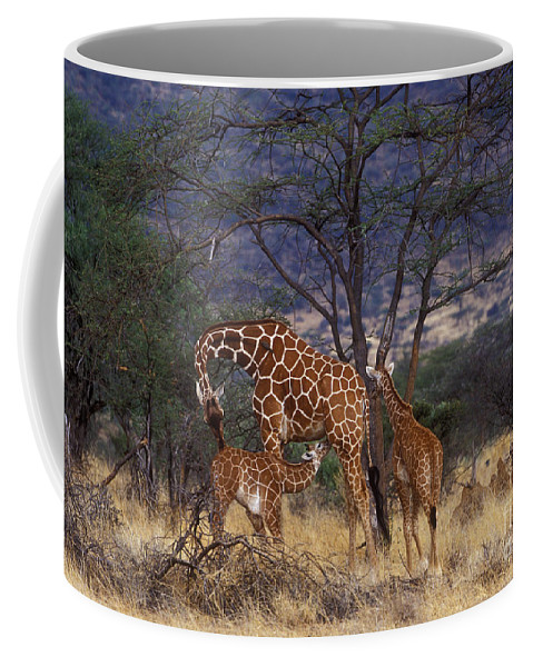 Giraffe Coffee Mug featuring the photograph A Tender Moment by Sandra Bronstein