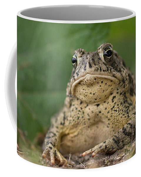Photography Coffee Mug featuring the photograph A Toad Appears To Be Frowning He Sits by Joel Sartore