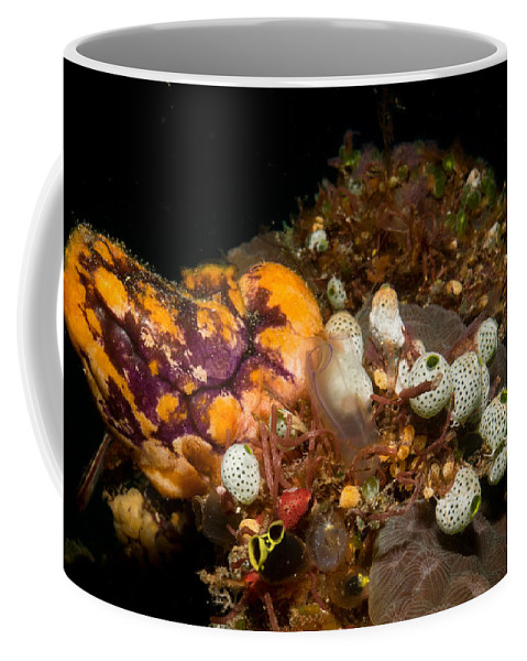 Diving Coffee Mug featuring the photograph A Ton Of Tunicates by Mumbles and Grumbles