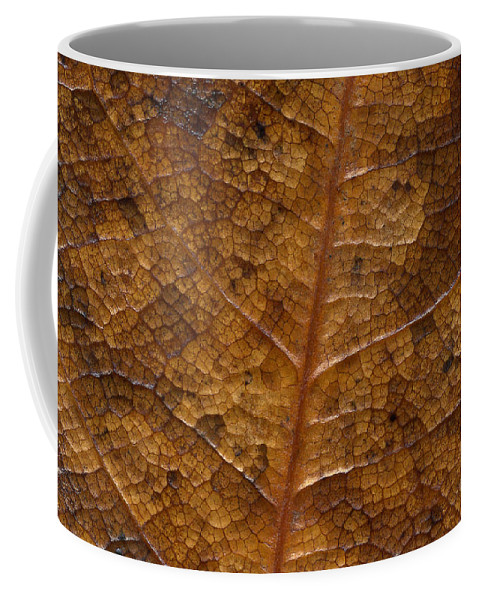 Leaves Coffee Mug featuring the photograph A Touch Of Fall by Richard Rizzo