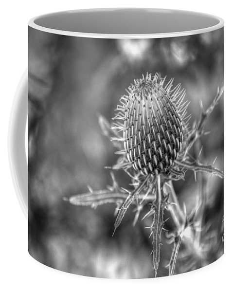 Nature Coffee Mug featuring the photograph A Touchy Subject by Sharon McConnell