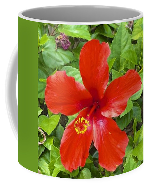 Red Coffee Mug featuring the photograph A Very Red Flower by Mario MJ Perron