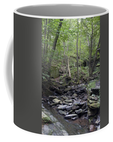 Woods Coffee Mug featuring the photograph A Walk In The Woods by Steven Natanson