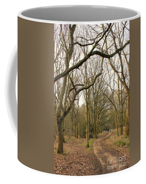 Walk Coffee Mug featuring the photograph A Walk In The Woods by Vicki Spindler