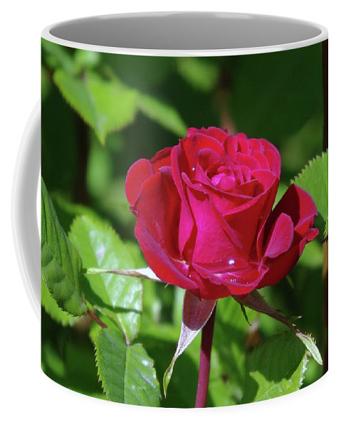 Rose Coffee Mug featuring the photograph A Watered Rose by Jeff Swan