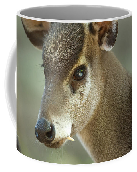 Photography Coffee Mug featuring the photograph A Western Tufted Deer Elaphodus by Joel Sartore