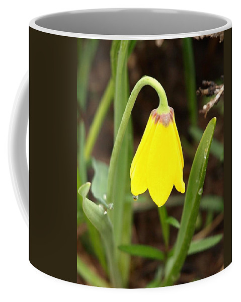 Flower Coffee Mug featuring the photograph A Yellow Bell's Tear by DeeLon Merritt