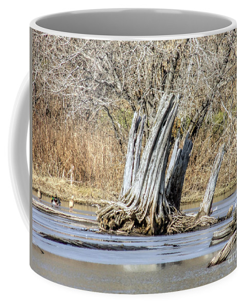 Old Wood Coffee Mug featuring the photograph Aboriginal Stumps by William Tasker