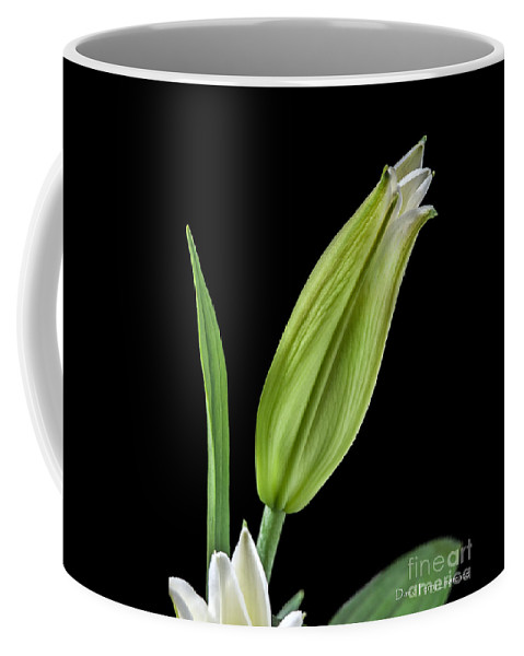 Lilies Coffee Mug featuring the photograph White Oriental Lily About To Bloom by David Perry Lawrence