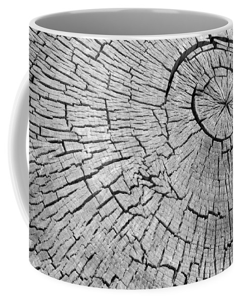 Trees Coffee Mug featuring the photograph Abstract Tree Cut by James BO Insogna