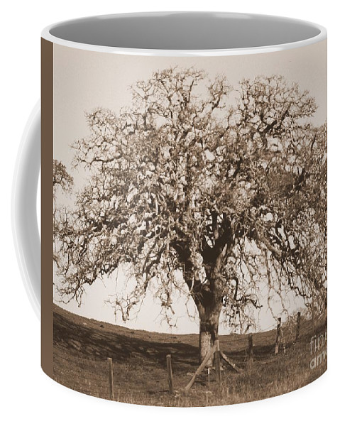 Tree Coffee Mug featuring the photograph Acacia Tree In Sepia by Carol Groenen