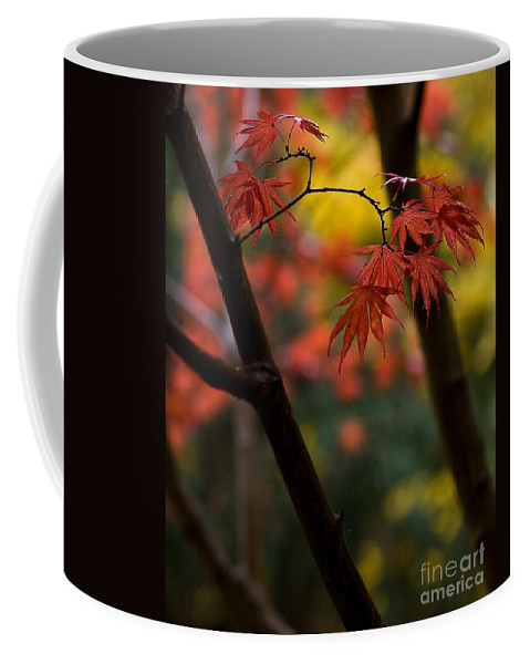 Acer Coffee Mug featuring the photograph Acer Finish by Mike Reid