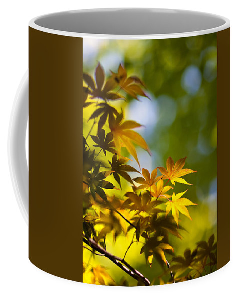 Japanese Maples Coffee Mug featuring the photograph Acer Glow by Mike Reid