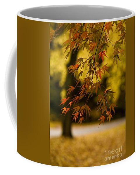 Acer Coffee Mug featuring the photograph Acers Turning by Mike Reid