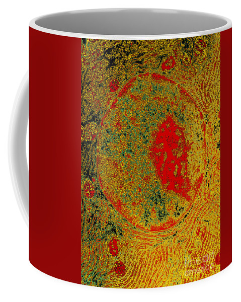 Acinar Coffee Mug featuring the photograph Acinar Cell, Tem by Don W. Fawcett