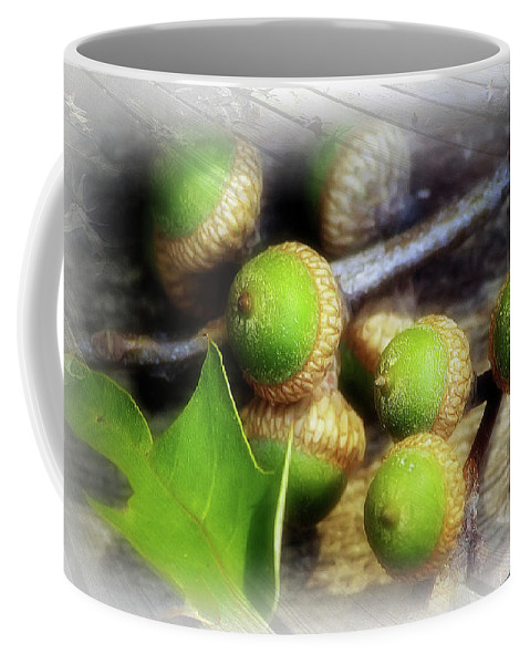 2d Coffee Mug featuring the photograph Acorns by Brian Wallace