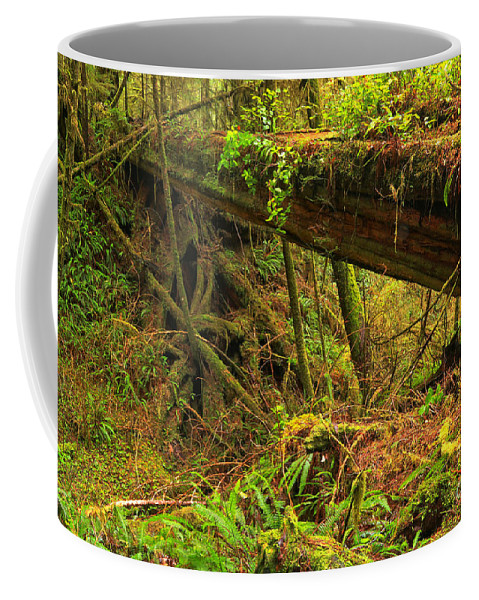 Pacific Rim National Park Coffee Mug featuring the photograph Across The Ravine by Adam Jewell