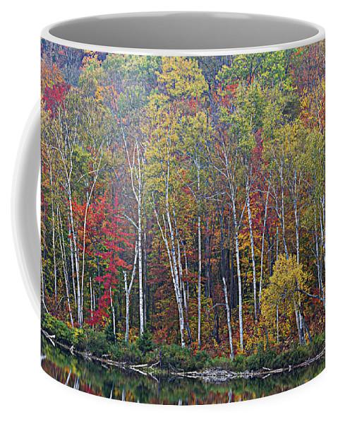 Birch Trees Coffee Mug featuring the photograph Adirondack Birch Foliage by Tony Beaver